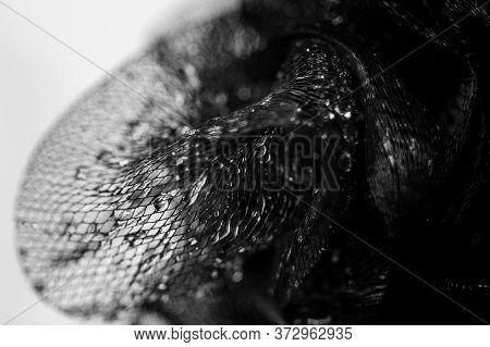 Water Drops On A Black Net Background Dark Veil Black And White Veil