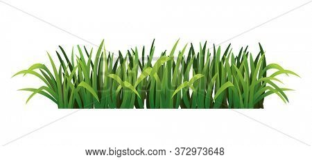 Green grass border. Fresh green grass. Isolated on transparent background.  Illustration for use as design element