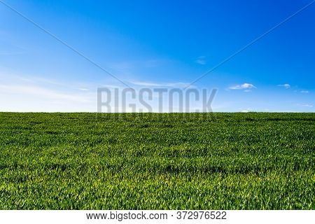 Green Wheat Field. Green Grass. Blue Sky With Clouds. Landscape. Green Meadow With Blue Sky. Horizon