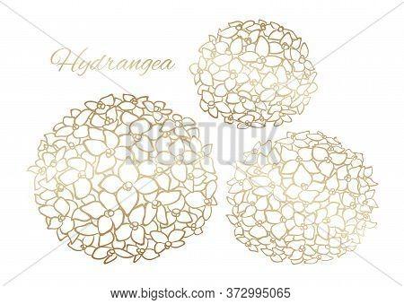 Golden Outline Hydrangea, Vector Isolated Clip Art