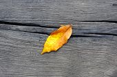 One autumn leaf fall on old wood poster