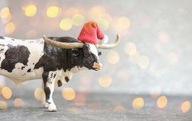 2021 Year Of The Ox Or Bull. New Year Poster With Toy Bull In Red Hat Defocused Lights Or Bokeh. Hap
