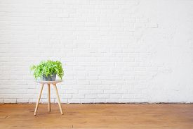 Home Plant On A Coffee Table Against The Background Of An Empty Brick White Wall In The Interior In