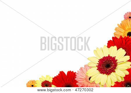 Abstract background with gerber flowers on white background