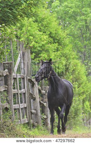 Black horse in the garden
