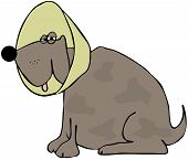 This illustration depicts a brown dog with a neck cone. poster