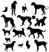 Vector dog collection on a white background poster