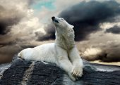 White Polar Bear Hunter on the Ice in water drops. poster