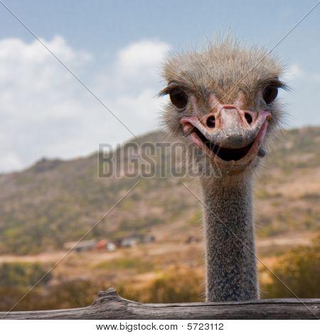 Smile, Ostrich!