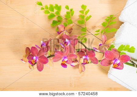 Red  Orchid, Towels And   Branch Of Fern On Bamboo Wooden  Background