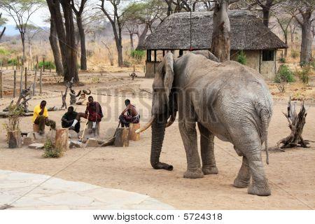 Massai Guards And Wild Elephant (circa September 2008, Ruaha National Park area, Tanzania)
