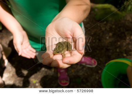 girl holds a frog