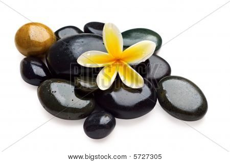Spa Still Life With Yellow Flower On The Wet Stones