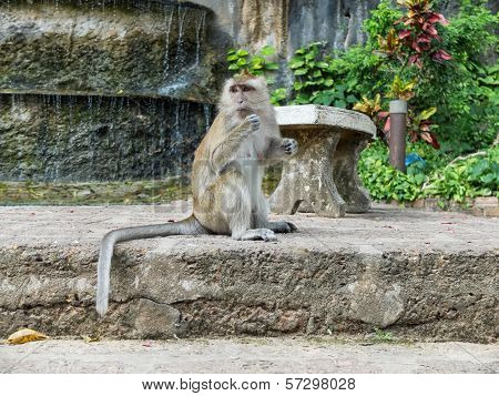Monkey is sitting on a concrete and looking into the distance for something she interested in poster