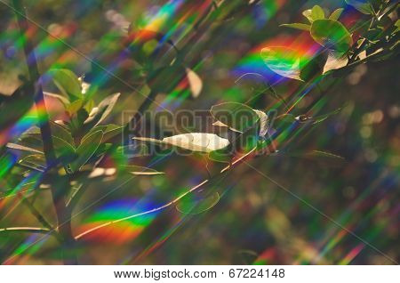 Plant Photosynthesis Abstract