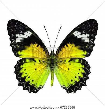 Beautiful Yellow Butterfly in fancy color profile isolated on white background poster
