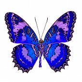 Beautiful Blue butterfly in fancy color profile isolated on white background poster