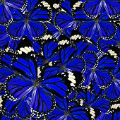 Blue Background Texture made of Common Tiger Butterflies in fancy color and patterns poster