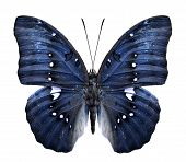 Close up of blue butterfly in fancy color Isolated on White Background poster