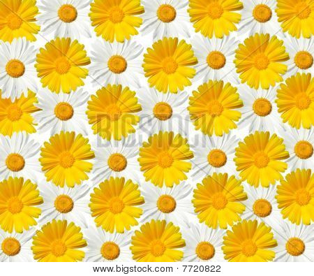 Daisy Texture - High Resolution