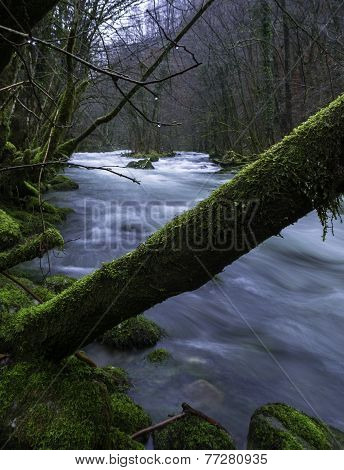 Tree over The River