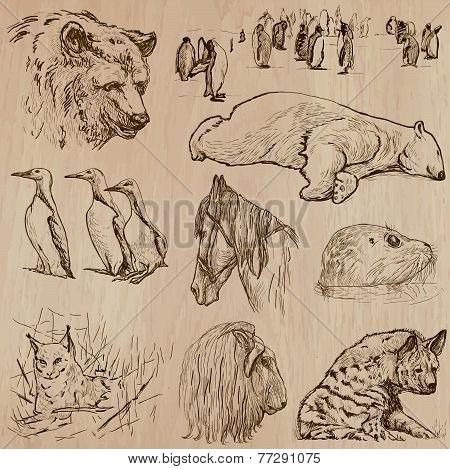 Animals Around The World (part 21). Hand Drawn Vector Pack.