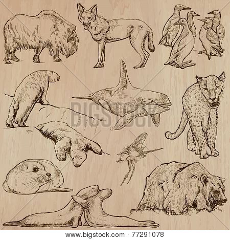 Animals Around The World (part 22). Hand Drawn Vector Pack.