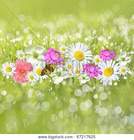 Flowers in the dewy grass