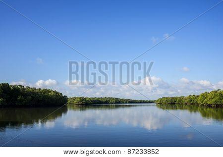 Red Florida Mangrove Trees