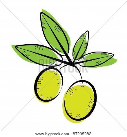 Vintage, isolated, green twig with olives and leaves or twig with lemons, retro design, white backgr