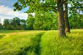 Summer Sunny Forest Trees, Green Grass, Lane, Path, Pathway. Nature Wood Sunlight Background. Instant Toned Image poster