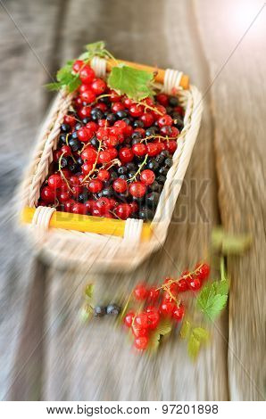 Little basket with redcurrant and blackberries on the old wooden table with ray effect