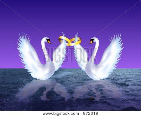 Swans Wedding