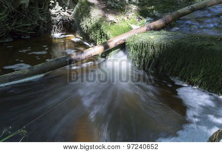 Fallen Tree In Stream