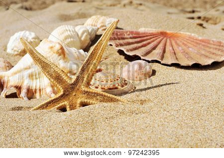 closeup of a starfish and some seashells and conches on the sand of a beach