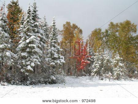 Early Snowfall