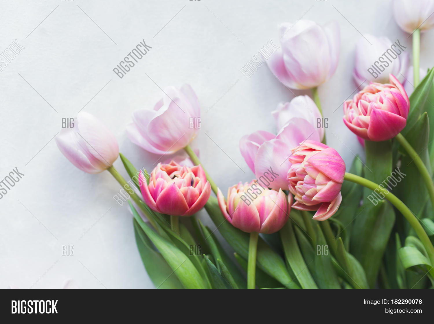 Pink Tulip Tulips Image Photo Free Trial Bigstock