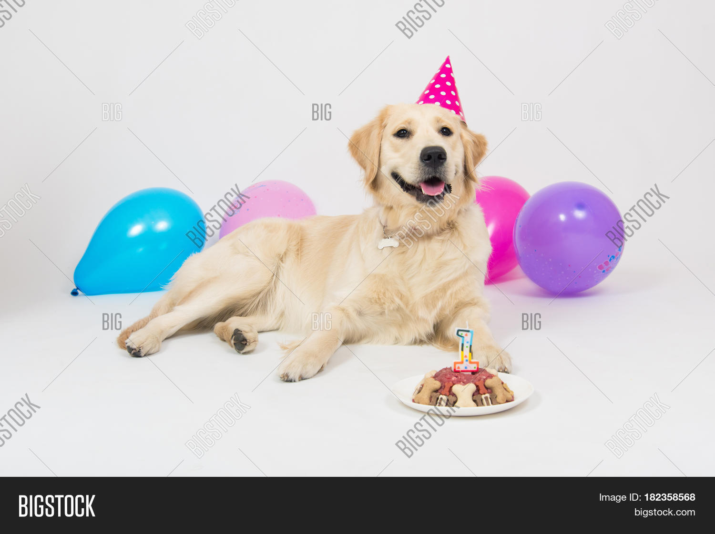 Awe Inspiring Happy Smiling Golden Image Photo Free Trial Bigstock Funny Birthday Cards Online Alyptdamsfinfo