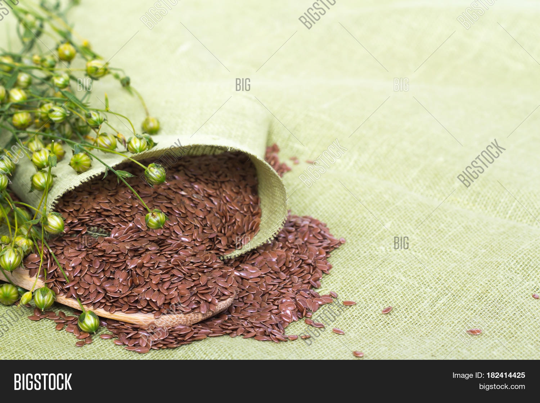 Dry Flax Plant Seeds Image & Photo (Free Trial) | Bigstock
