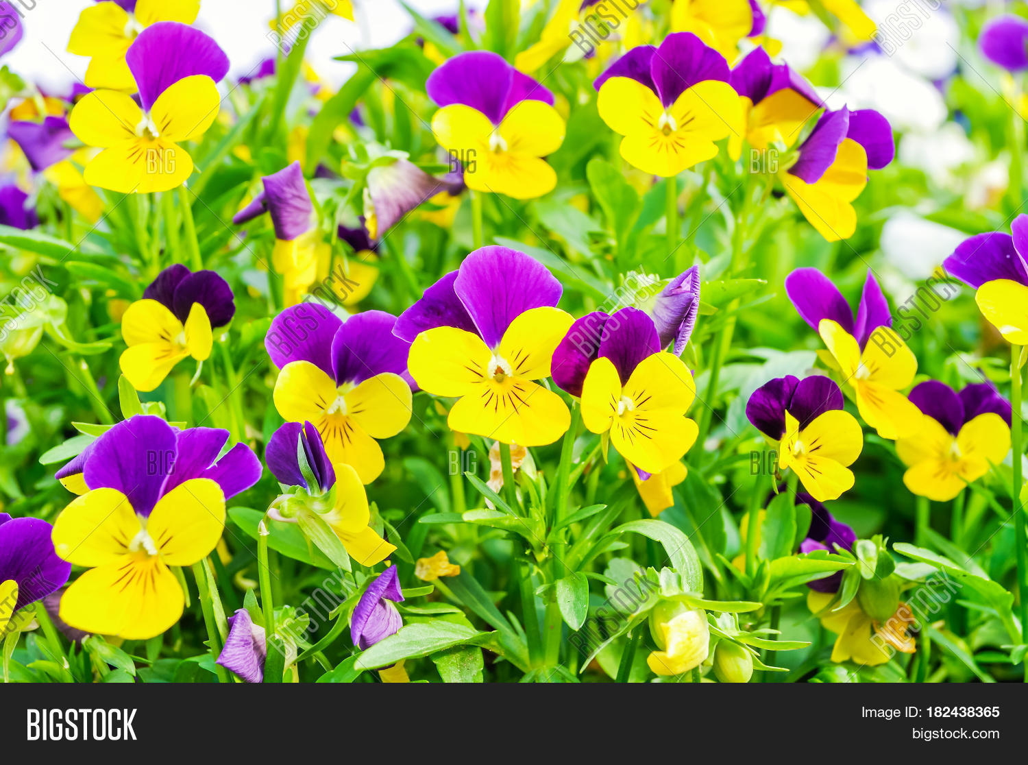 Summer Flower Nature Image Photo Free Trial Bigstock