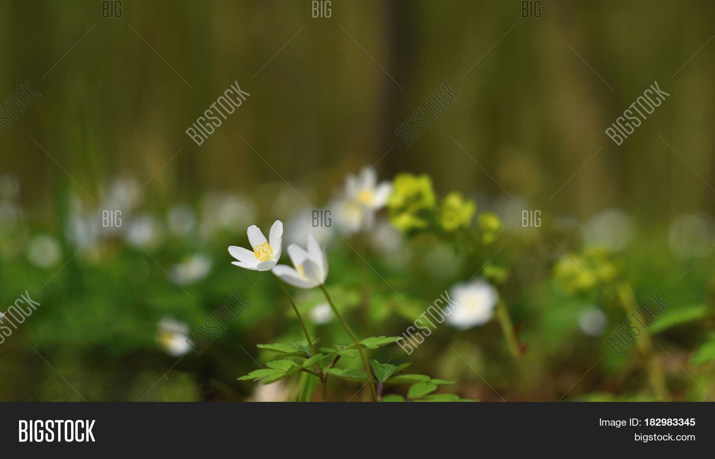 Spring White Flowers Image Photo Free Trial Bigstock