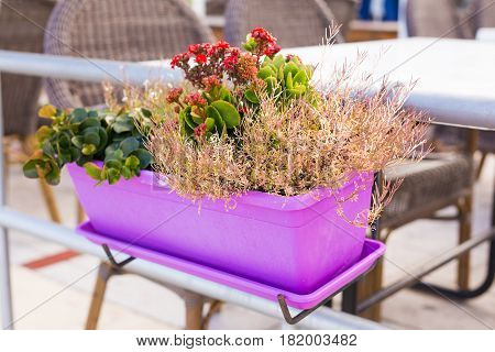Colored potted plants. Different potted plants and seedlings