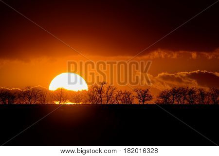 Silhouttes of trees on orange background of savanna sunset