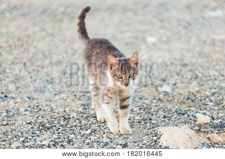 Concept of homeless animals - Stray cat on the street.