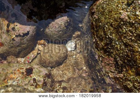 Seashell underwater. water background with seashell on the beach.