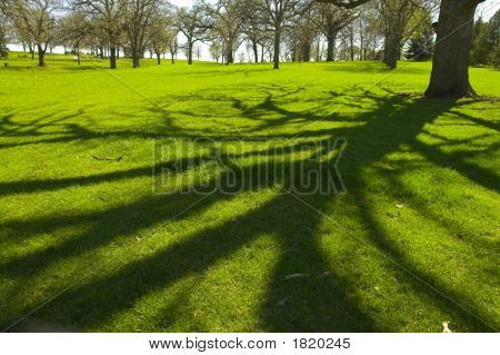 Wooded Areas