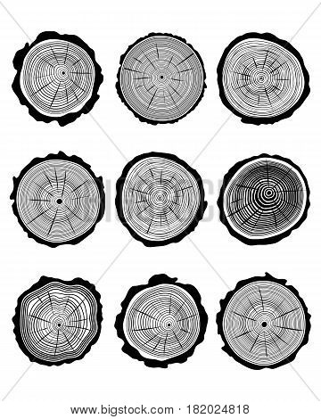 Set of cross section of the tree trunk on a white background