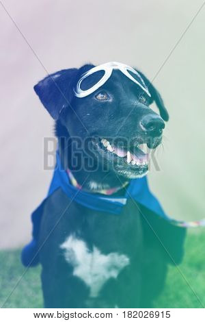 Black Dog Wear Superhero Costume with Mask