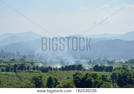 smoke from straw burning on paddy field