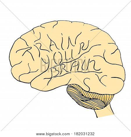 Train your brain hand drawn motivational poster where words form convolutions. Stock vector illustration in ink with brain silhouette and inspirational quote.